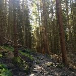 the forest walk to aber falls
